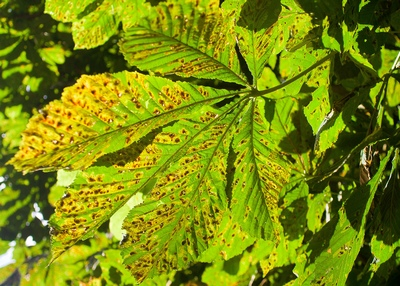 Вредители и болезни цветов